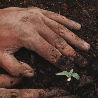 Wir pflanzen einen Baum für dich (Patenschaft)