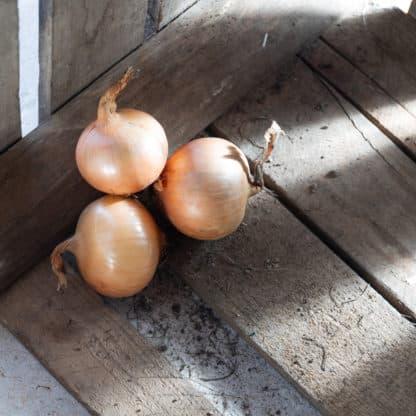 BIO weißer Zwiebel ca. 1 kg